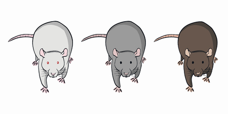 Three colorful rats on white background. Set of different rats. Albino, gray and brown rat.