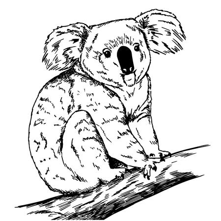 Koala hand getekende vectorillustratie. Realistische schets zwarte lijntekening.