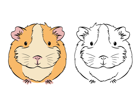 Plump cute Guinea pig, sketch vector graphics black and white drawing. Sketches of cavys on white background. Cavy in color.