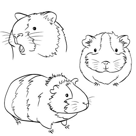 Cochon d'Inde mignon dodu, croquis de graphiques vectoriels dessin noir et blanc Vecteurs