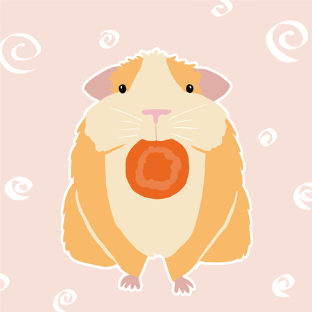 Colorful cavy on pink background. Illustration of cavy with carrot. Guinea pig, color vector, white background.