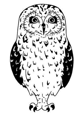 Black and white owl on white background. Line art bird drawn in simple style.