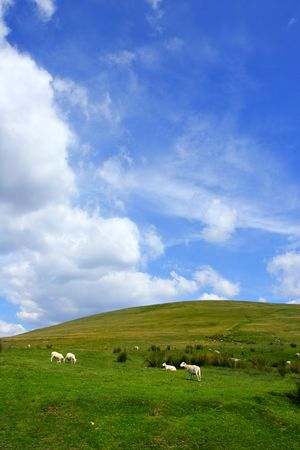 Sheep grazing on a hillside with a blue sky and cumulus clouds. photo
