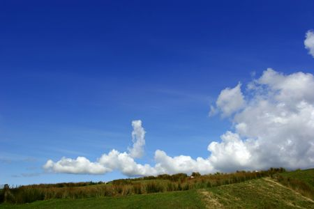 A low horizon  of reeds in a field, with low level cumulus clouds in a blue sky. photo