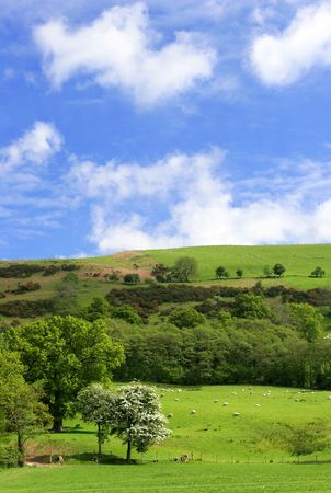 Meadows and hills in spring with flowering hawthorn blossoms and sheep grazing, on a blue sky day with clouds. Stock Photo
