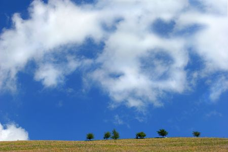 Six hawthorn trees on the top of a hillside with a blue sky and clouds. photo