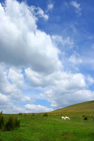 Storm clouds above a hillside with sheep in summer.