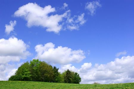 remoteness: A clump of trees in a meadowfull  of wildflowers with a blue sky and puffy white clouds. Stock Photo