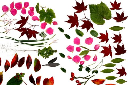 Autumnal flowers and leaves on a white background. Not isolated.
