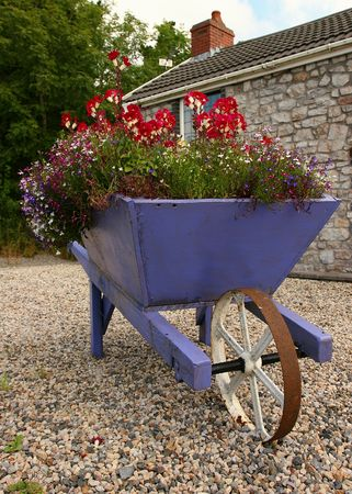 laden: Purple wooden wheelbarrow full of flowers, standing on gravel in a driveway of an old stone house.