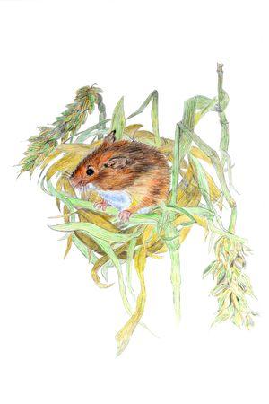 Hand drawn illustration of a mouse in its nest. Reklamní fotografie