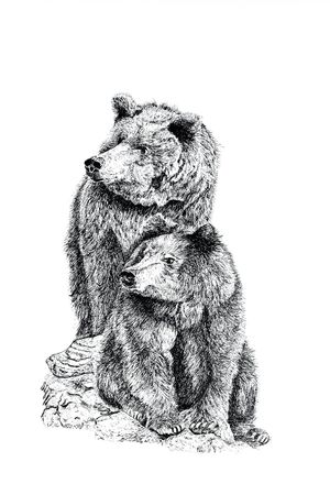 Pen and ink hand drawn illustration of two bears on a white background. Stock Photo