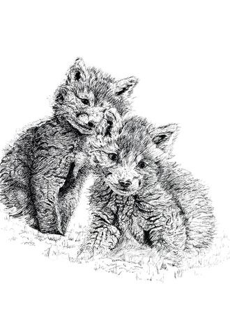 Pen and ink hand drawn illustration of a pair of  fox cubs against a white background.
