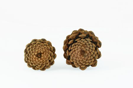 The base view of two pinecones set against a white background. Stock Photo