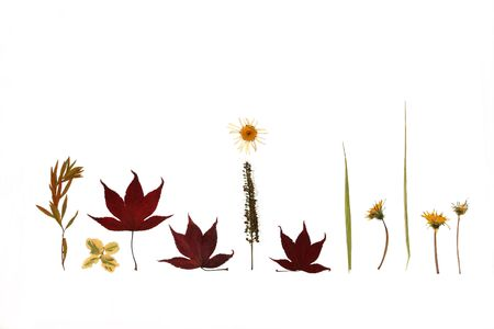 pressed: Design of dried pressed flowers, leaves and plants of autumn.