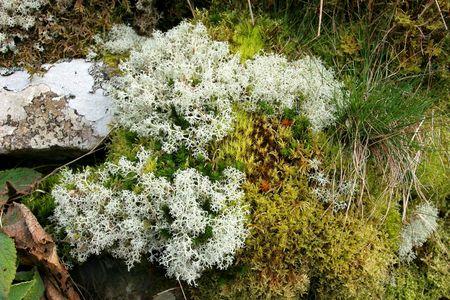 gramineas: Musgos, l�quenes y hierbas en un setos en primavera.  Foto de archivo