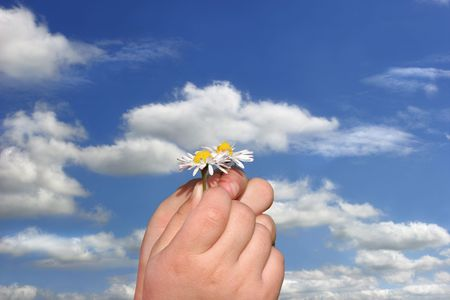 Fingers of a child holding two small daisy flowers against a blue sky with clouds. Stock Photo - 459135