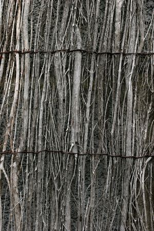 fencing wire: Vertical wooden willow fencing with two strands of metal wire holding it together. Stock Photo