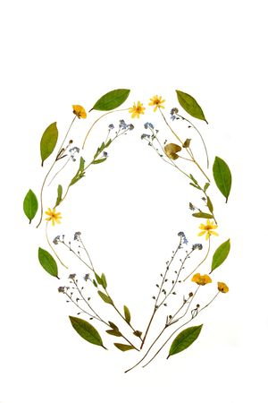 pressed: Abstract oval arrangement of dried and pressed buttercups, forget me not flowers and bay leaves.