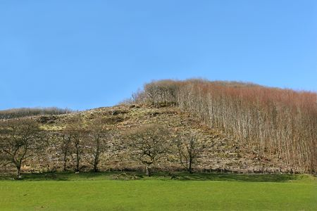 unsustainable: Hillside with areas of forest cut down with areas of trees still remaining. Set against a clear blue sky.