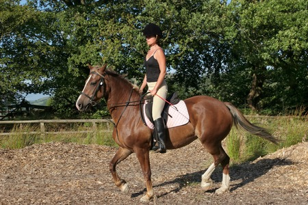 pony girl: Young woman in riding gear sitting upright on a welsh section d horse with trees and blue sky to the rear.