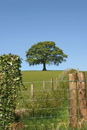 fencing wire: Wood and wire fencing with an oak tree in summer in full leaf on the far horizon against a blue sky.