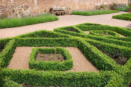 hedged: Geometric diamond shaped hedge designs within a walled red brick garden with plants inside the hedged areas and lavender borders to the rear.