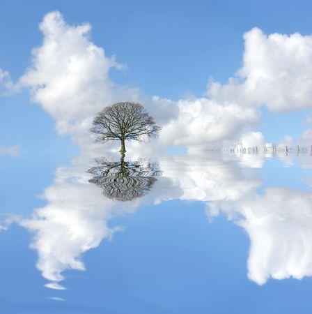 arbol de problemas: Resumen de las inundaciones en invierno, con un roble y peque�a valla con reflejo en el agua agit�. En contraste con un cielo azul con nubes c�mulos.  Foto de archivo