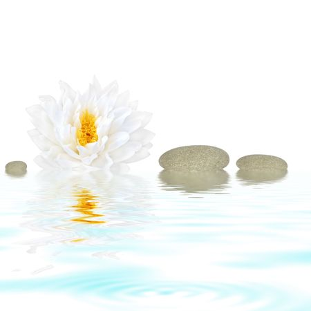 finest: Abstract of a white lotus lily (gladstoniana genus.) with three grey pebbles reflected over rippled water and set against a white background.