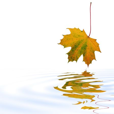 Abstract of a maple leaf with the colors of Autumn reflected over softly rippled water. Set against a white background. Stock Photo - 2375601