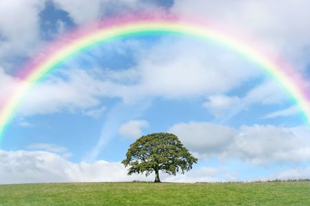 rainbow: Oak tree in summer standing alone in a field with a small fence to one side. Set against a blue sky with alto cumulus clouds and a rainbow.
