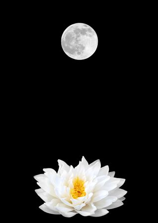 in full bloom: Abstract of a white lotus water lily (gladstoniana genus) and a full moon on a Spring Equinox. Set against a black background. Stock Photo