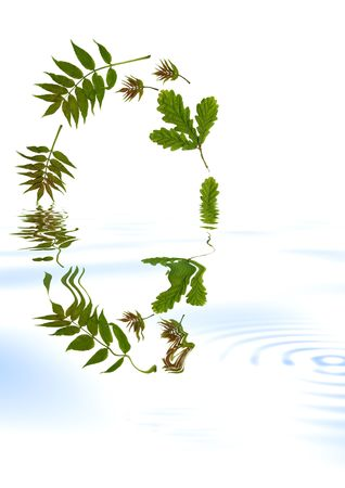 ash: Abstract oval arrangement of oak and ash leaves reflected in water. Set against a white background.