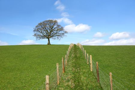 Oak tree on a horizon in early spring with a double wooden post and wire fence line dividing a field in the foreground. Set against a blue sky with altocumulus clouds. Stock Photo - 2453539
