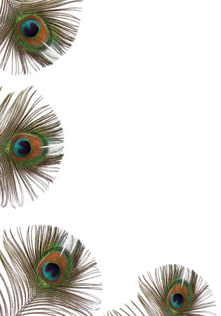 Iridescent eyes of four peacock feathers set along the left hand side and bottom of the frame, against a white baclground.