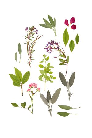 Abstract arrangement of pressed herbs and flowers of summer against a white background.