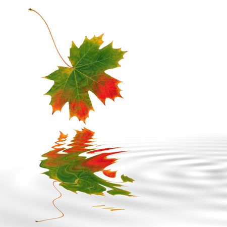 Abstract of a maple leaf with the colors of Autumn reflected over soflty rippled water. Set against a white background. Stock Photo - 2550636