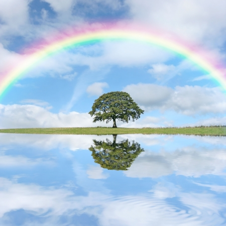 Oak tree in full leaf in summer, set against a blue sky with a rainbow and alto cumulus clouds, with reflection in water to the foreground.