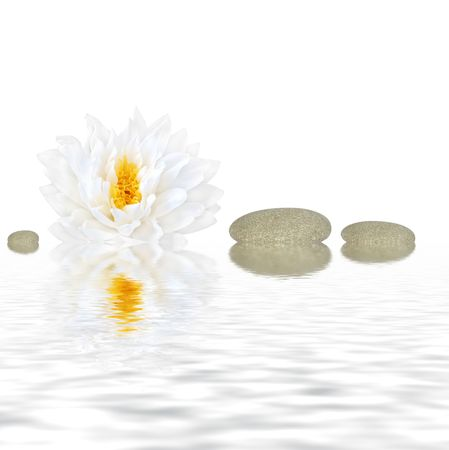 Abstract of a white lotus lily (gladstoniana genus.) with three grey pebbles reflected over rippled water and set against a white background.