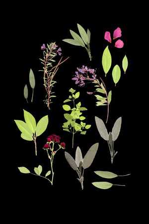 Abstract arrangement of pressed herbs and flowers of summer against a black background. photo