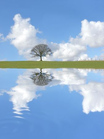 Abstract of an oak tree in winter standing alone on an area of grass, with reflection in rippled water. Set against a blue sky with cumulus clouds. photo