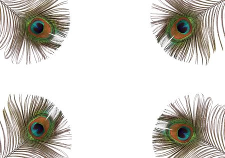 Iridescent eyes of four peacock feathers set at each of the corners of the frame. Set against a white background.  Stock Photo