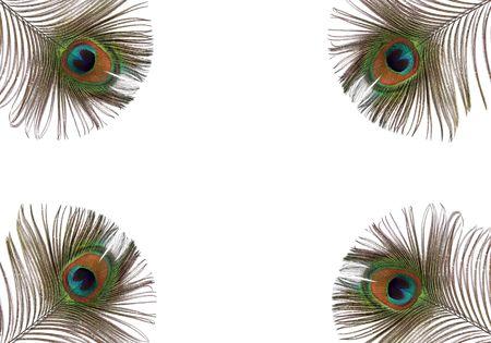 plumas de pavo real: Iridiscentes ojos de cuatro plumas de pavo real fijado en cada una de las esquinas del marco. Set sobre un fondo blanco.