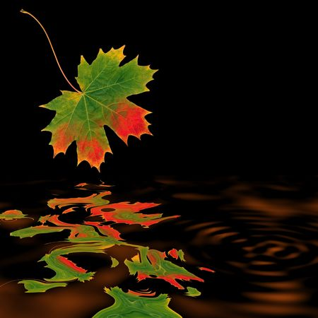 sycamore leaf: Abstract of a maple leaf in autumn with reflecton over burnished copper colored rippled water and set against a black background.