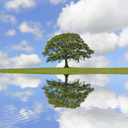Abstract of an oak tree in full leaf in summer standing alone on an area of grass, with reflection in rippled water. Set against a blue sky with cumulus clouds. Stock Photo - 2699132