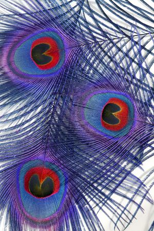 threesome: Abstract in blue and red of three peacock feathers, featuring the eyes, overlaid against a white background. Stock Photo