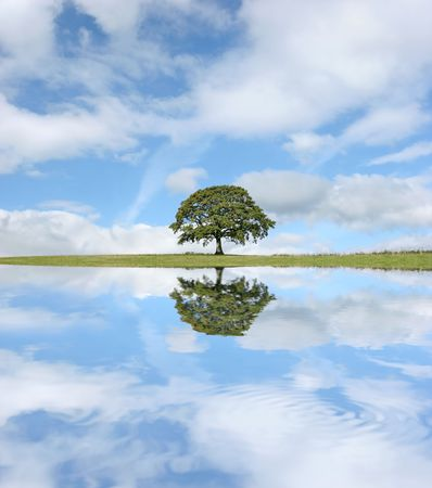 Oak tree in leaf in summer against a blue sky, with reflection in water to the foreground. Stock Photo - 2807955