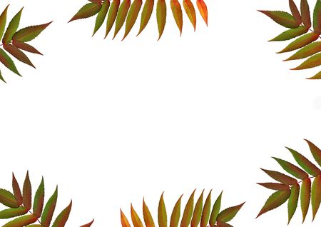 european rowan: Six red and green rowan leaves in the colors of fall forming a border, against a white background. (Sorbus Embley)
