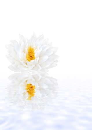 Abstract of a white lotus water lily with yellow stamens in full flower with soft blue  reflection in water. (Gladstoniana genus.) Isolated over white. Stock Photo - 2850808