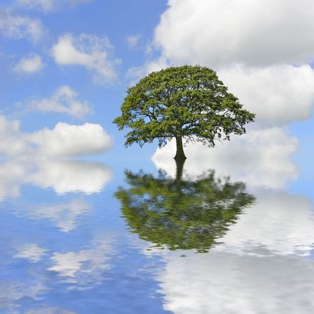 reflection: Abstract of an oak tree in full leaf in summer standing alone and surrounded by flooding with reflection in rippled water. Set against a blue sky with cumulus clouds. Stock Photo